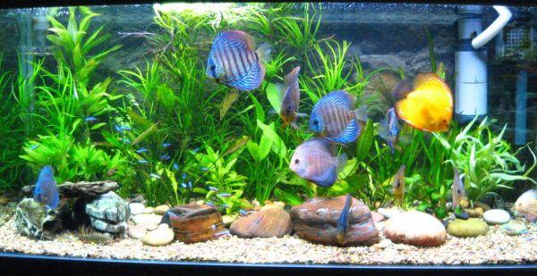 Exotic Colorful Fish Aquarium Shop In Chandigarh Mobile No 99153