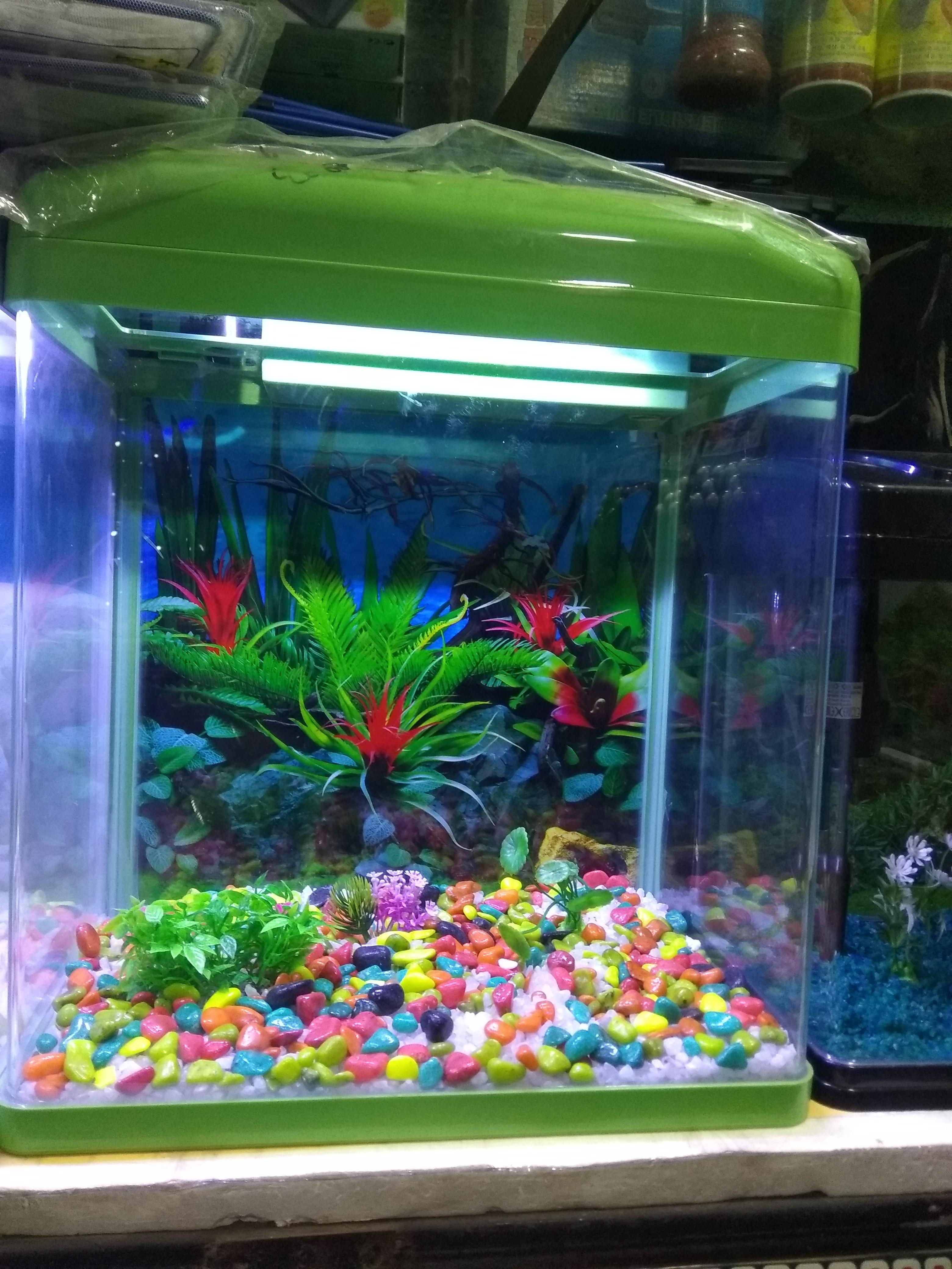Aquarium shop 22 D Chandigarh  9915332799